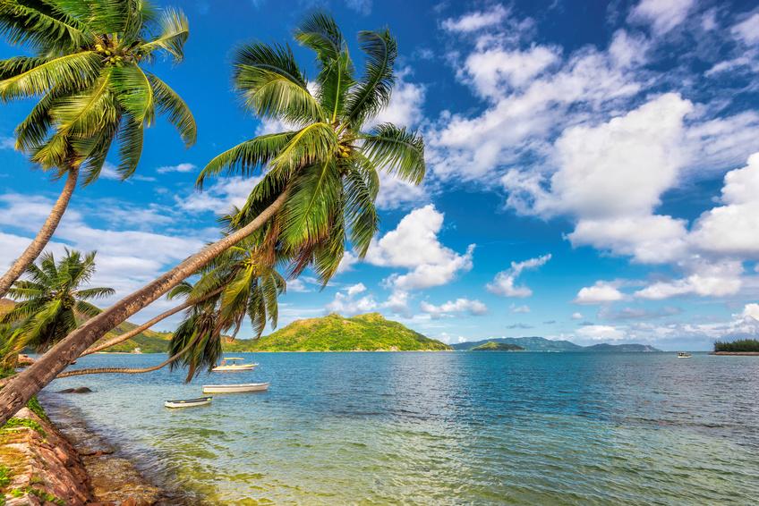 Kokosnusspalmen auf tropischer Insel.